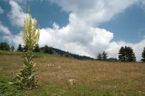 Species-rich Nardus grasslands, on siliceous substrates in Mt. Oiti. (Photo: Nikos Petrou)
